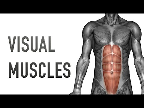 Visual Muscles Upper Back Upper Arm Youtube