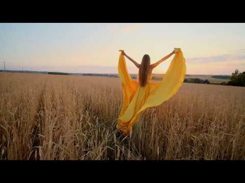 Artgrid Story Trailers | Sunset In a Wheat Field