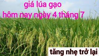 Giá lúa gạo hôm nay ngày 4 tháng 7 năm 2020 tăng nhẹ trở lại nhé bà con