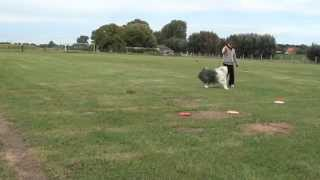 North Shore Vancouver Frisbee Dog Training, The North Vancouver Disc Dogs