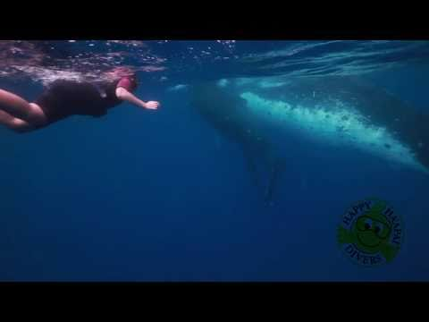 Diving & Whales in Ha'apai in the Kingdom of Tonga