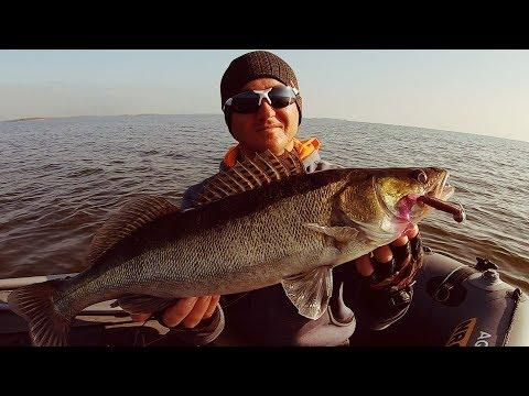 Вопрос: Чем болеют рыбы – судак в Воткинском водохранилище (точки по телу)?