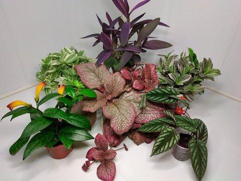 Растения едут в новый дом #31