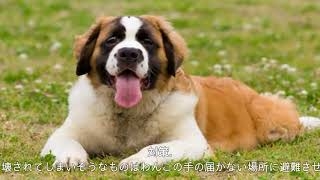 「お金がかかる犬」の傾向と対策 チャンネル登録はこちら⇒https://goo.g...