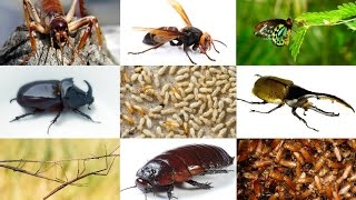 Top 10 Largest Insects In The World