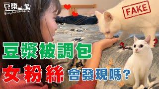 【豆漿 - SoybeanMilk】貓咪被調包 女粉絲會發現嗎?