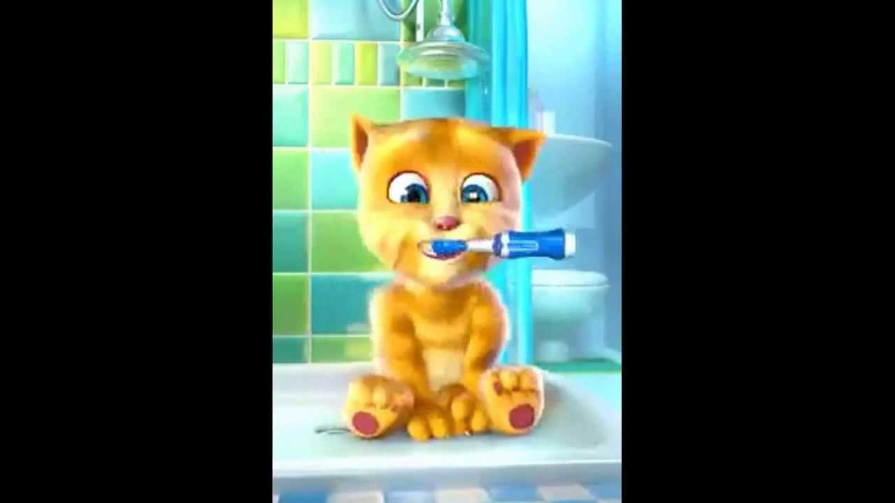 Guten Morgen Katze Youtube