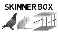 Das Skinner Box Experiment leicht erklärt!