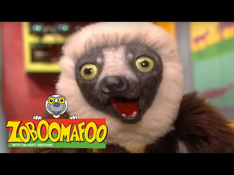 Zoboomafoo 202 - Hot and Cold (Full Episode)