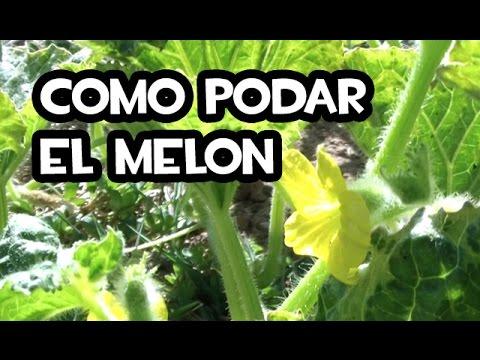 melon poda y despunte wmv doovi