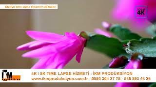 Bitkiler / Gelişim süreçleri time lapse - İKM Produksiyon