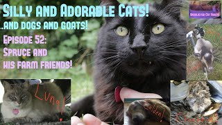 😻Silly and Adorable Cats! and Dogs and Goats!😸 ♡52 ● Introducing Spruce & His Farm Friends! 😺😸 thumbnail