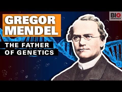 Gregor Mendel: The Father Of Genetics