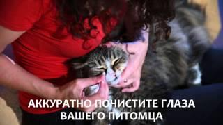 Палочки для чистки глаз кошек и котов
