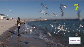 Зло из добрых рук: как при кормлении не навредить диким птицам