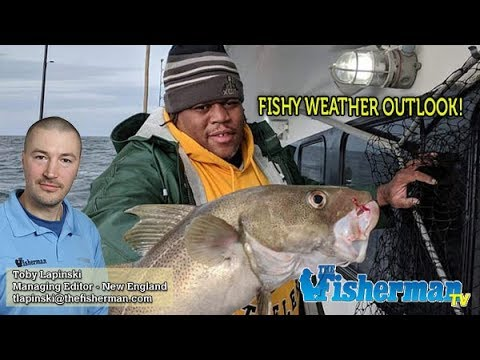 NEW BLUEFISH REGULATIONS And December 19, 2019 New England Fishing Report With Toby Lapinski