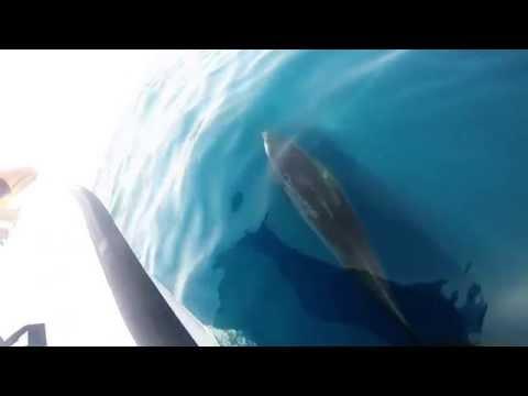 Oman Dolphin Watching