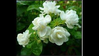 Красивый цветок из зефирной глины от Анны Горбуновой
