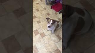 ЖЕСТЬ!!!!!!!! Собака стоит под гимн России!!!😂