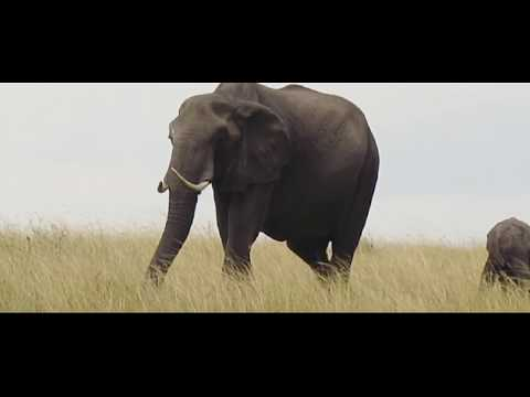 3 days Safari in Masai Mara - Magnificent Africa