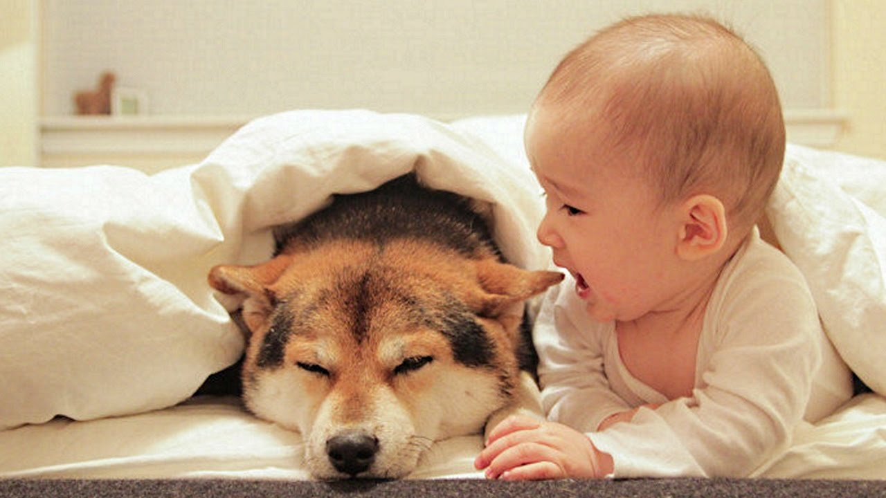 Dog Loves Baby When The First Time They Met Compilation