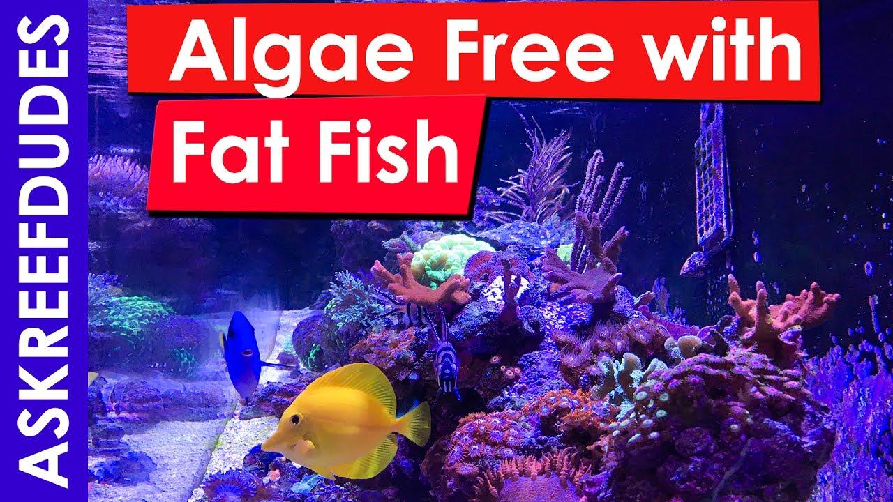 Fat Free Fish