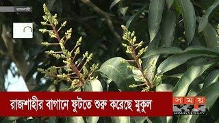 রাজশাহীর বাগানে ফুটতে শুরু করেছে আমের মুকুল | Rajshahi Mango | Somoy TV