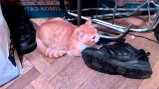 Рыжый котёнок ищет хозяина спб