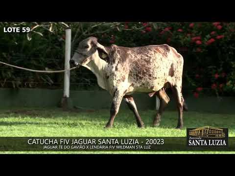 SANTA LUZIA   LOTE 59