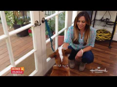@lauranativo-shows-us-how-to-train-your-dog-to-use-the-potty-bell