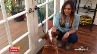 @lauranativo Shows Us How To Train Your Dog To Use The Potty Bell