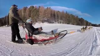видео Заказать катание на собаках (хаски) в Москве
