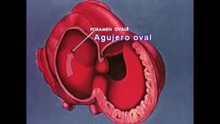 Circulatorio tubos sistema