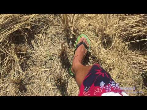 東部海岸國家風景區 全年行銷宣傳影片 (二分鐘精華版)