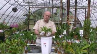 Orchid Potting Demonstration 1