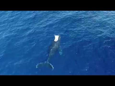 Aerial Shoot of Whake (鯨の空撮) in 沖縄県ナガンヌ島