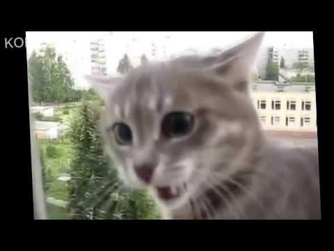 cats funny pranks смешные проделки котов