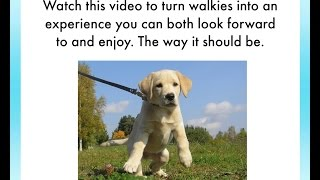 How To Leash Train A Puppy | 3 Tips To Train Your Puppy To Love Her Leash | Puppy Leash Training