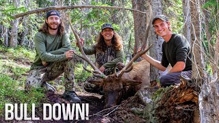 BULL DOWN! COLORADO PUBLIC LAND ELK HUNTING! (OTC TAG)