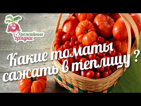 Какие томаты сажать в теплицу? #1 urozhainye_gryadki