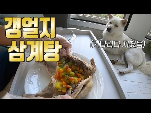 Eng) 복날에는 강아지도 함께 삼계탕 먹어요~! ㅣ Having Chicken Soup with My Dog in the Canicular Day~!