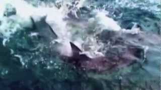 Shark Week [Crave You Dubstep] Air Jaws (HD) 2012