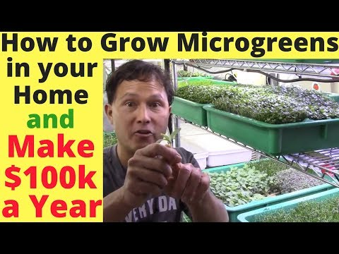 How to Grow Microgreens in Your Home & Make $100,000+  a Yea
