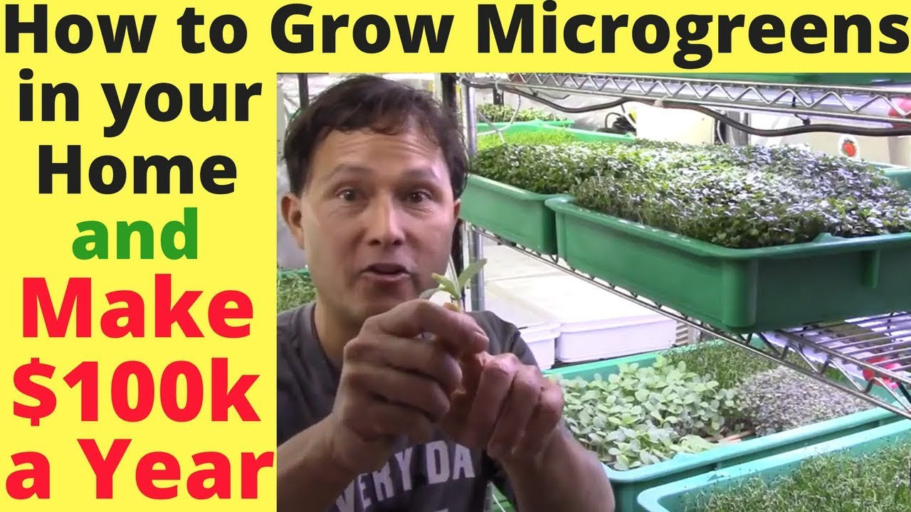 How To Grow Microgreens In Your Home Amp Make 100 000 A