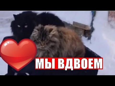 Мы вдвоем кот и кошка любовь ❤️ умные животные 👍 Cat and cat love are smart animals