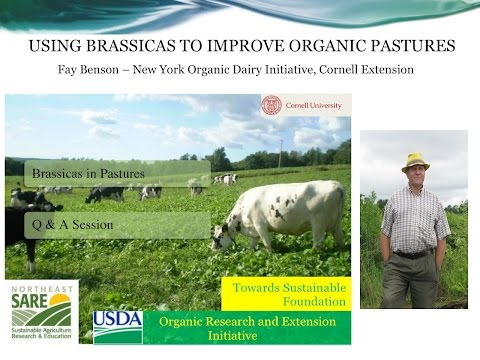 Introducing Brassicas into the Organic Pasture