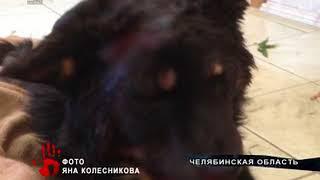 В Магнитогорске ищут живодеров, которые нанесли собаке несколько ударов топором