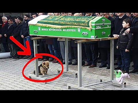 Собака пришла на похороны хозяина. То, что произошло дальше, поразило всех!