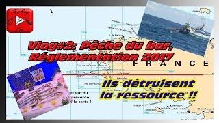 Vlog#2: Pêche du Bar, Protégeons la ressource !
