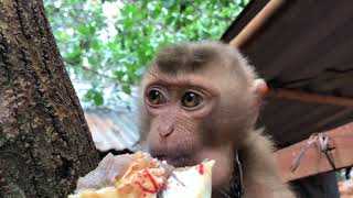 Bỏ Phố Lên Rừng 2017: Tập2- Chơi Với Khỉ(Playzing with monkeys)